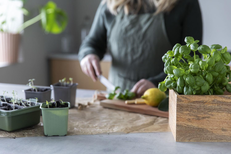 lykken er å høste selvdyrkede grønnsaker