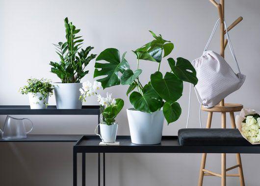 grønne planter i miljø monstera zamioculcas