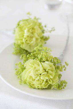 limegrønne nelliker