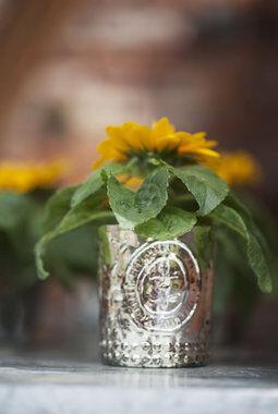 solsikker i potte