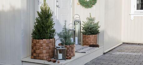 pynt inngangspartiet med vintergrønne busker