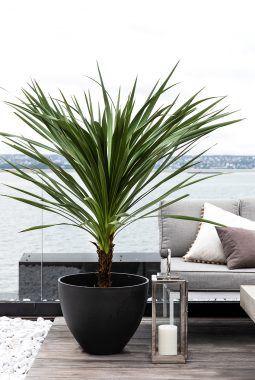 miks ulike palmer