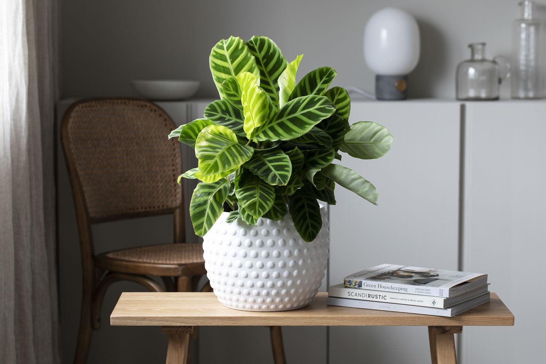 Stilig med grønnplanter i de nye Dots pottene.