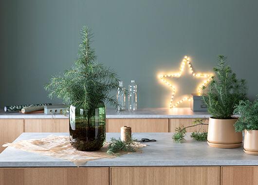 Pynt til jul med vintergrønne planter