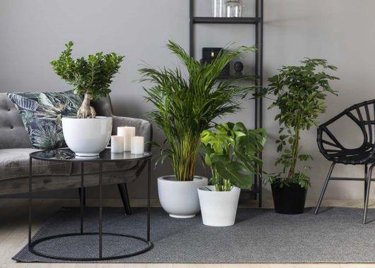 grønne planter er bra for inneklima