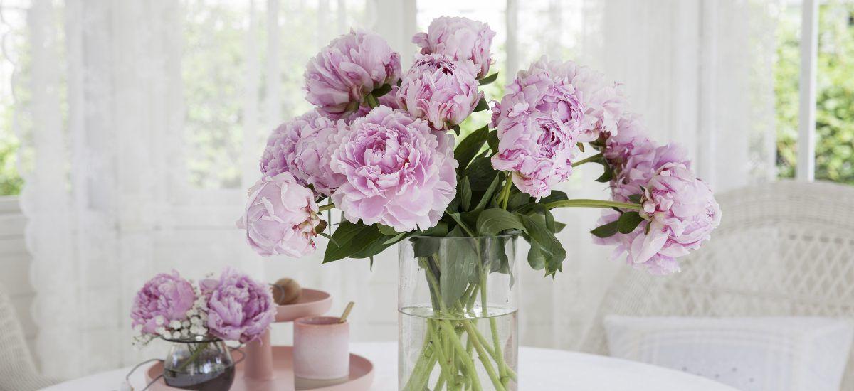 fyll vasen med vakre peoner