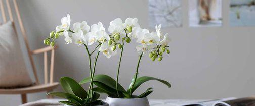 Tilbud på blomster hos Mester Grønn