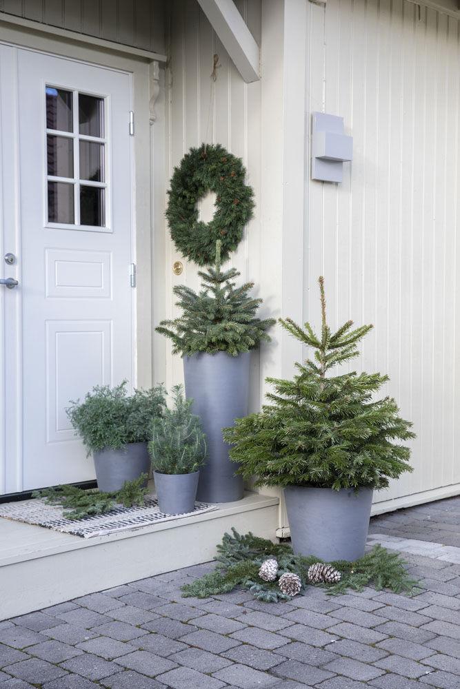 Pynt inngangspartiet med vintergrønne busker.