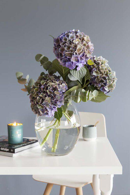 Vakre avskårne hortensia i vase