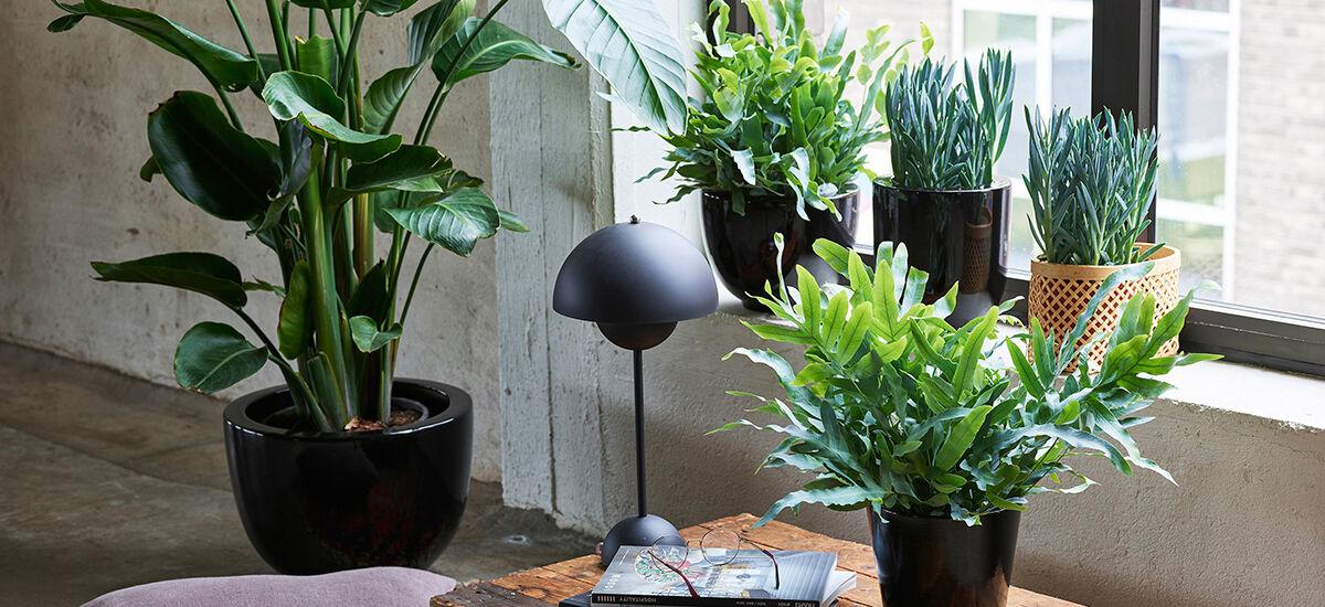 grønne planter i miljø