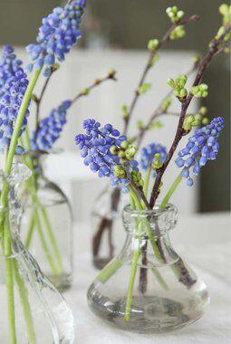 perleblomster i vase