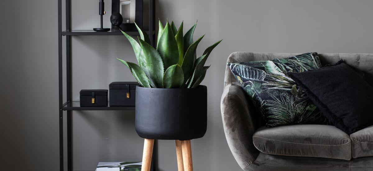 kunstig agave i miljø_grønne planter