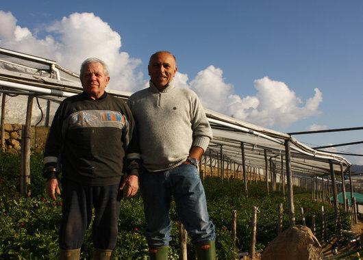 Italianske gartnere ranunkler
