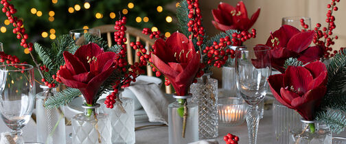 vakkert julebord med amaryllis