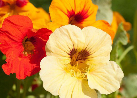 blomkarse kan du lett så selv