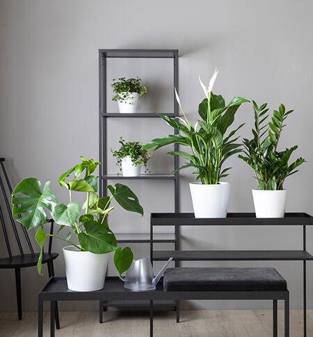 1 års kvalitetsgaranti på alle grønne planter