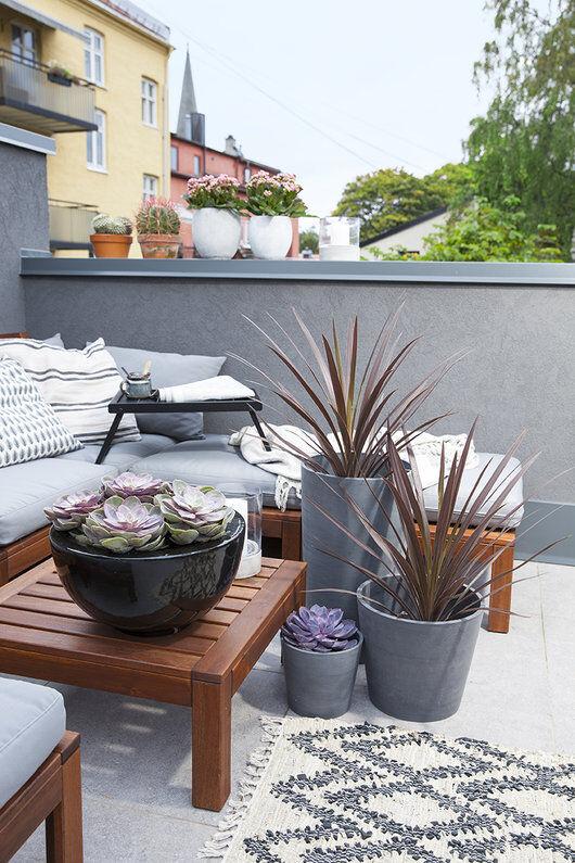 balkong med sukkulenter og grønne planter
