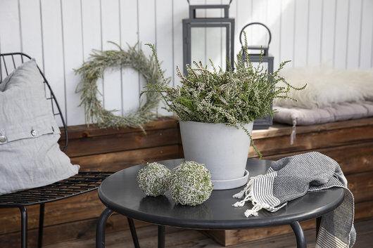 høst med hvit calluna lyng