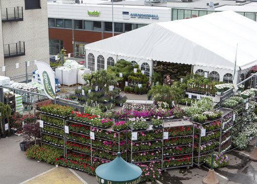 Blomstermarked hos Mester Grønn CC Vest