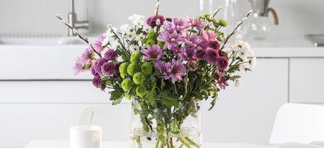 vakker og holdbar krysantemum