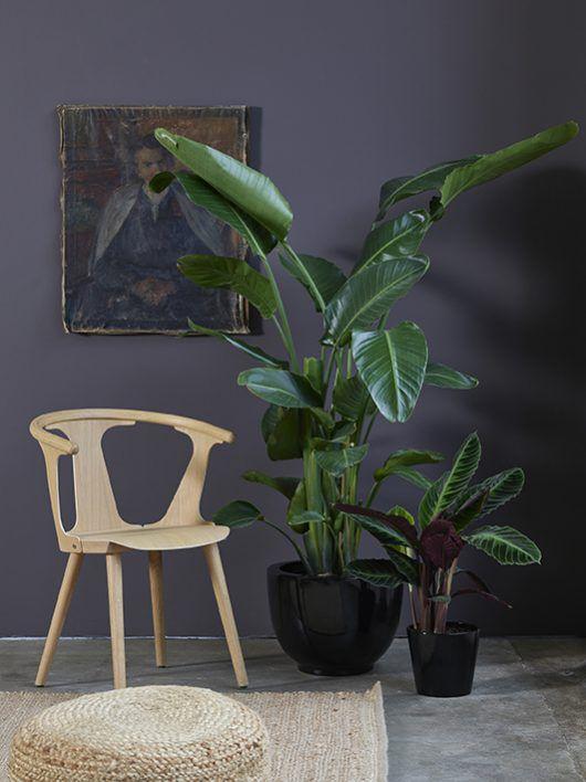 grønne planter i potte_strelitzia