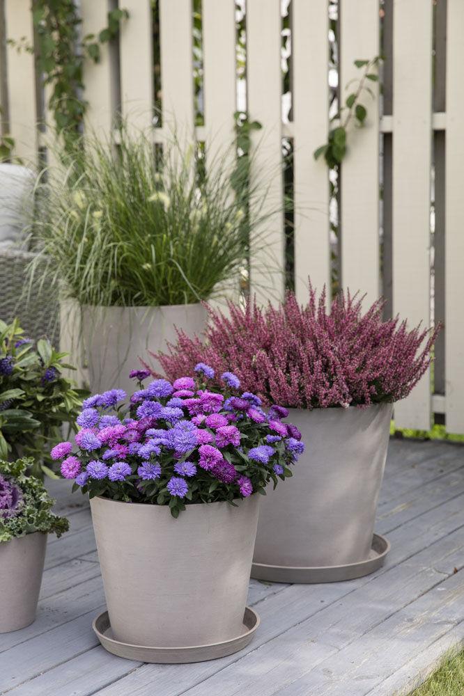 Inngangsparti med hortensia og høstgrønt