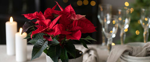 Fairtrade julestjerne