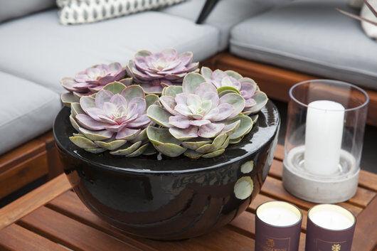 sort keramikkpotte og sukkulenter er lekkert sammen