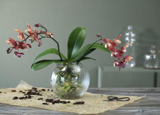 orkide i vase