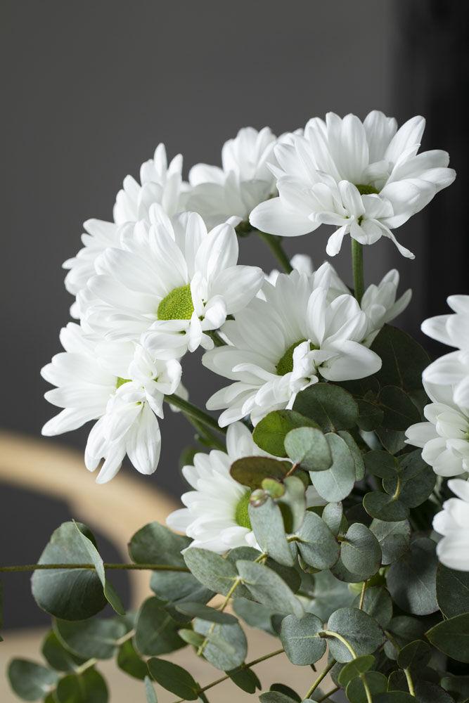 Hvit krysantemum