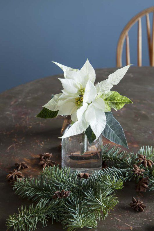 hvit stjerne i dalebekken vase