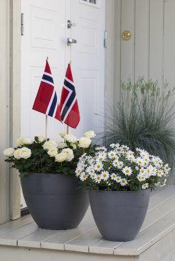 blomster i rødt, hvitt og grønt til nasjonaldagen