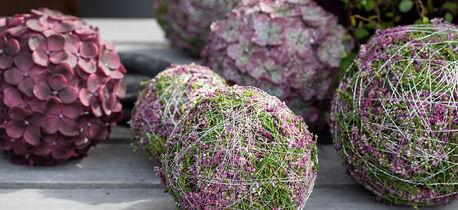 høst med vakre lyngkuler i miljø