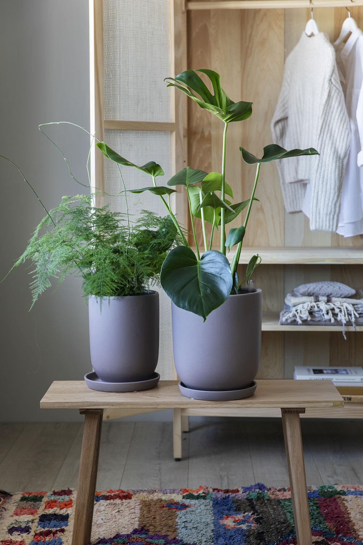 Grønne planter i Cashmere potter