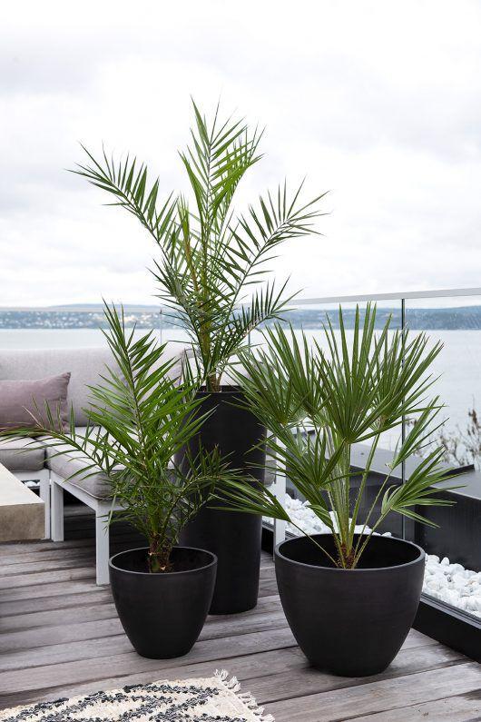 terrassepalmer gir en trendy og lettstelt terrasse