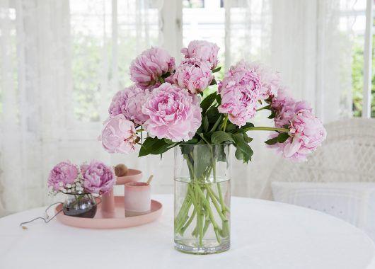 sarah Bernhardt peonene er den mest populære varianten vi har
