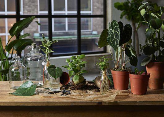 Grønne planter i potter