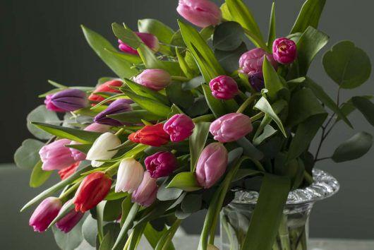 tulipaner i mange farger i glassvase