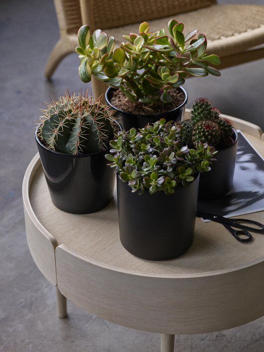 kaktuser og sukkulenter_grønne planter