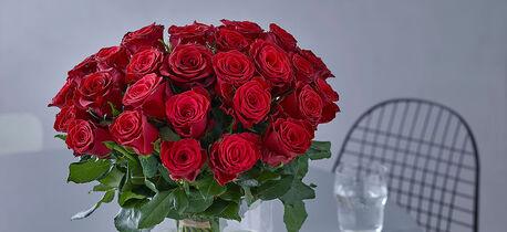 Røde roser valentine