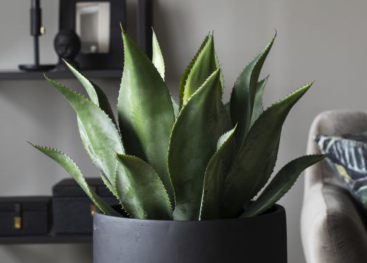 grønne planter_kunstig agave