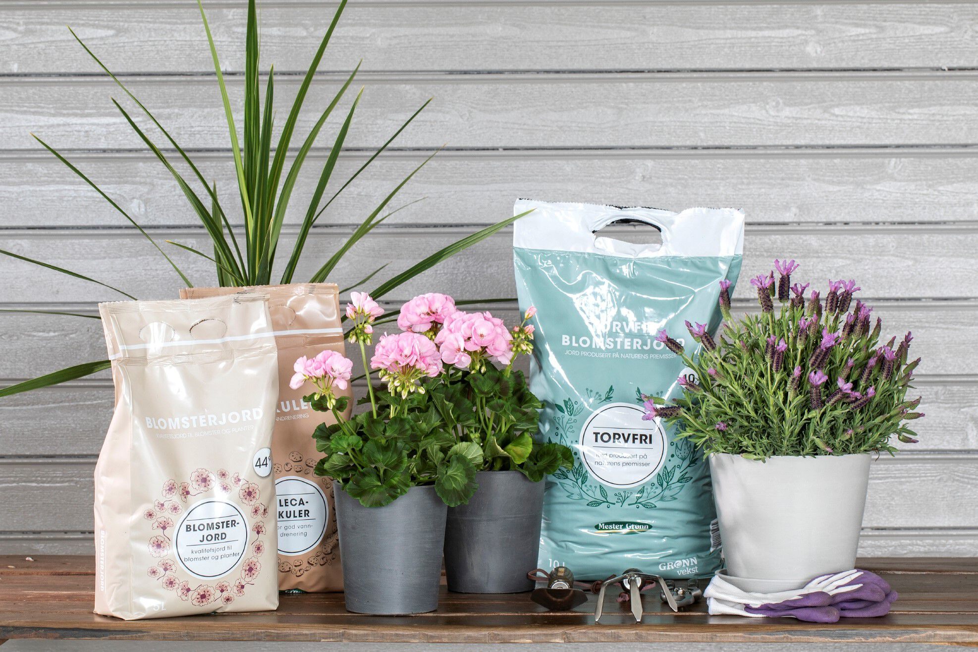 Planting av sommerblomster med jord og leca