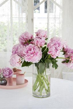rosa peoner i vase
