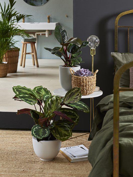 Grønne planter på soverommet