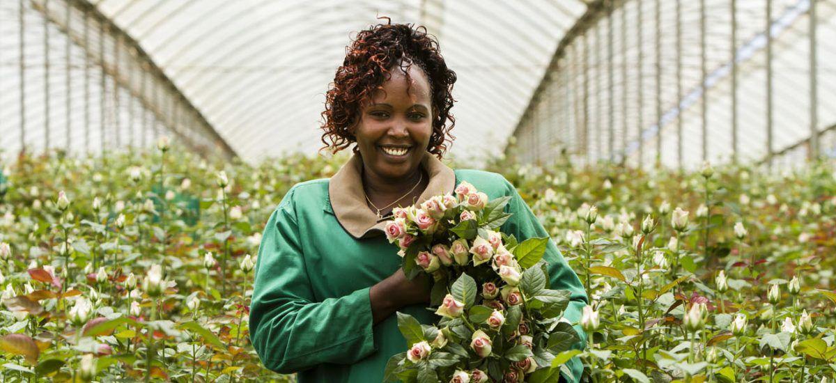 Fairtrade roser fra Mester Grønn