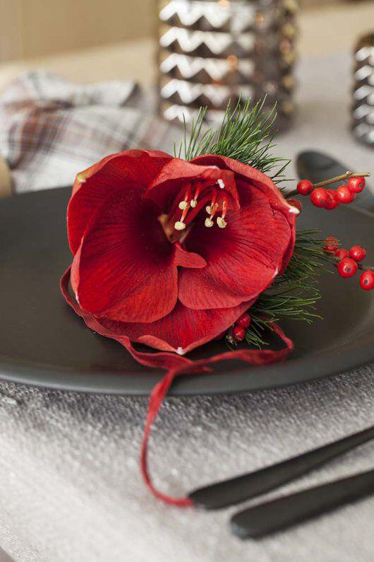 rød amaryllis med furu og ilexbær