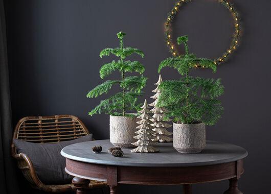 stuegran er en trendy og kul juleplante