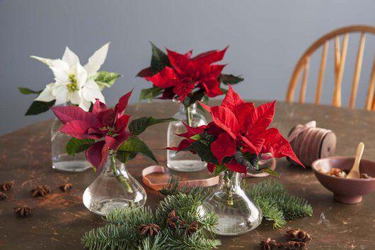 julestjerner i små vaser