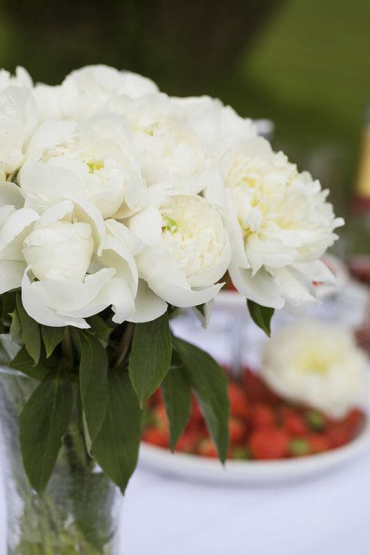 Hvite peoner i vase