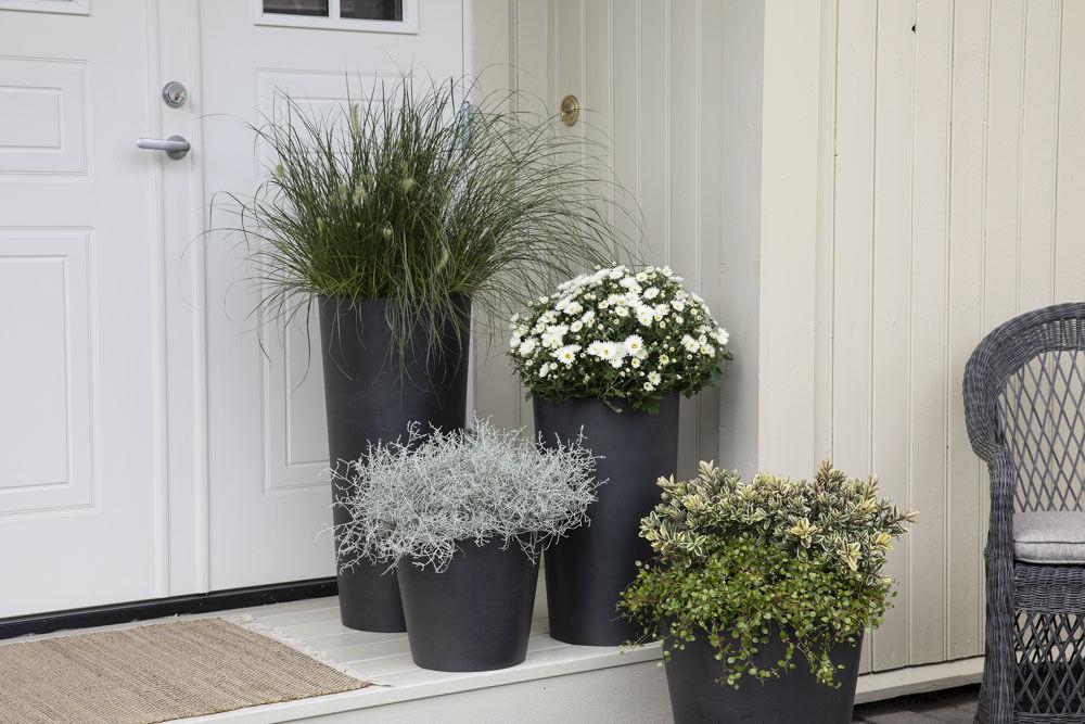 Pynt inngangspartiet med vakre høstblomster.